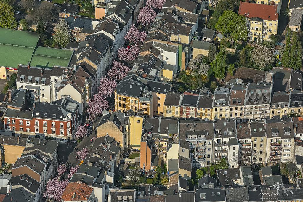 Kirschbluete-Bonner-Altstadt.jpg